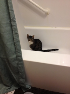 Cat in a tub...THAT is funny stuff. Well, the look on his face amuses me...